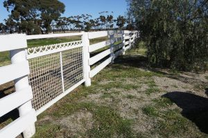 Rothwell Run Dog Kennel and Cattery Facilities in Melbourne